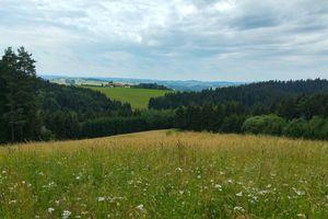 Kraft-Quelle-Baum-Weg St. Johann am Wimberg