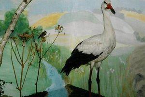 Vogelwelt Aigen-Schlägl